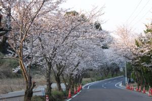 桜トンネルの入り口付近