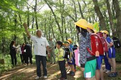 里山の樹木を観察