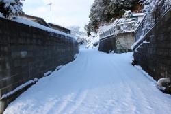 路面の降り積もった雪