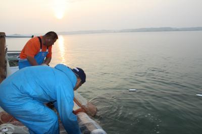 漁をする海老澤さん親子