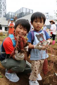 『スカイツリー金時収穫祭5』の画像
