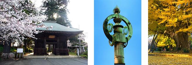 『西蓮寺(さいれんじ)』の画像