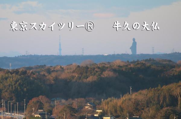 『タワーから見たスカイツリー』の画像