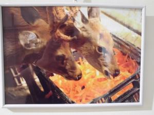 『香取の鹿3』の画像