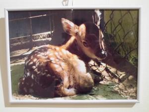 『香取の鹿4』の画像