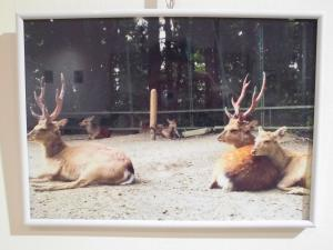『香取の鹿5』の画像