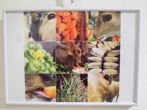 『香取の鹿6』の画像