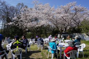 『桜3』の画像