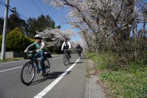 『桜4』の画像