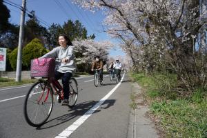 『桜7』の画像