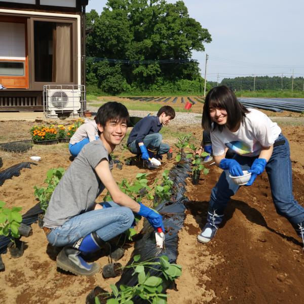『苗植え体験』の画像