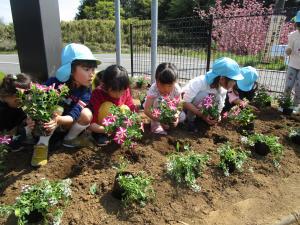 『幼稚園花寄贈3』の画像