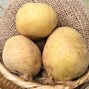 『ジャガイモ』の画像