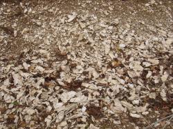 カキの化石床