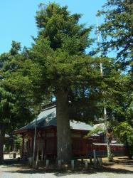 化蘇沼稲荷神社モミ