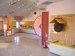 玉のミュージアム