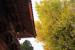 西蓮寺の大銀杏